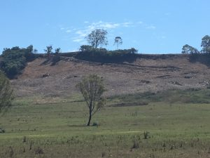 African Olive Control Steep Slope