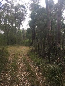 Maintain Fire Trail Wollondilly Council